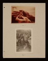 thumbnail image for Joseph Cornell: Sun in the Snow