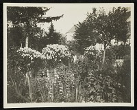 thumbnail image for Flower Bed at Giverny, France