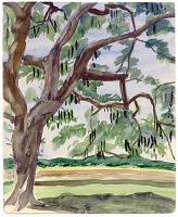 view Large Tree on Senado digital asset number 1
