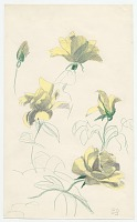 thumbnail image for Sketch of flowers from Tiverton, Rhode Island