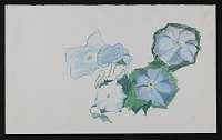 thumbnail image for Sketch of flowers