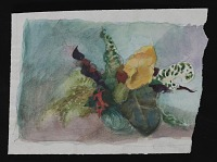Floral watercolor sketch by Polly Thayer.