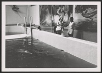 thumbnail image for Katharine Lane Weems modeling a dolphin in clay at the Atlantic Aquarium