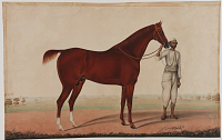 view A horse and groom digital asset number 1