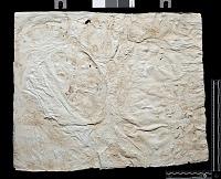 view SQ 14: Naqsh-i Rustam. Lines 14--20, right digital asset: Naqsh-i Rustam (Iran): Squeeze of Inscription, DNb, Old Persian Version, on the Tomb of Darius I