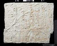 """view SQ 23: Naqsh-i Rustam: print marked. """"Akk. M. IIb 5--11"""" digital asset: Naqsh-i Rustam (Iran): Squeeze of Inscription, DNb, Akkadian Version, on the Tomb of Darius I"""