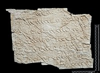 view SQ 103: Pahlavik, Illus. in Frye, Heritage of Iran, fig.46 digital asset: The Sassanian Inscription of Paikuli (Iraq): Squeeze (unpublished), Parthian Version