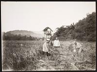 view Workers Harvesting Rice digital asset: Workers Harvesting Rice [graphic]