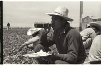 view Braceros at Meal Time digital asset: Braceros sit on the edge of a pepper field in California and have lunch.