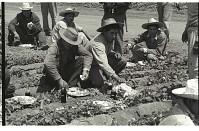 view Braceros at Meal Time digital asset: Braceros sit on the edge of a Californian pepper field and have lunch.