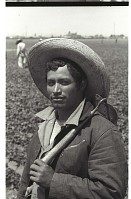 view Bracero in Field digital asset: A bracero with a short-handled hoe over his shoulder stands in a Californian field.