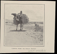 view Boy in Costume Atop Camel Bearing Barley Harvest; Young Camel Nearby; Fields and Mountains Beyond n.d digital asset number 1