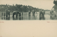 view Group in Costume with Elephants in Water n.d digital asset number 1