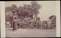 view Viceroy's five elephants with howdahs (canopied seats) and men, undated digital asset number 1