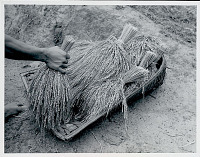 view Bound Rice Sheaves in Basket n.d digital asset number 1