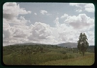 view Astrida planted hill, end of dry season, circa 1956 digital asset number 1