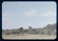 view Tanganyika savannah, circa 1956 digital asset number 1
