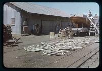 view Kigoma pier, Ivory, circa 1956 digital asset number 1