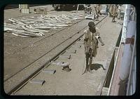 view Ivory and beggar - dock at kigoma, circa 1956 digital asset number 1