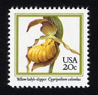 view 20c Yellow Lady's Slipper single digital asset number 1