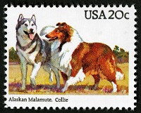 view 20c Malmute and Collie single digital asset number 1