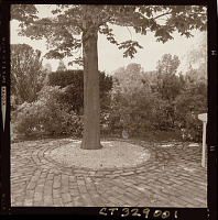 view [Unidentified Garden in Darien, Connecticut]: tree protected from ornamental brick paving by gravel-filled circle. digital asset: [Unidentified Garden in Darien, Connecticut] [photoprint]: tree protected from ornamental brick paving by gravel-filled circle.