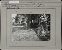 view Florida State Plant Board: Ophiopogon mondo japonicus. digital asset: Florida State Plant Board [photoprint]: Ophiopogon mondo japonicus.