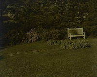 view [Unidentified Garden in Unidentified Location]: lawn with stone path, bench, bulbs, and rhododendrons. digital asset: [Unidentified Garden in Unidentified Location] [lantern slide]: lawn with stone path, bench, bulbs, and rhododendrons.