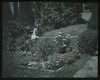 view [Unidentified Garden in Unidentified Location]: unidentified woman in garden with stone walk, planting beds, and roses. digital asset: [Unidentified Garden in Unidentified Location] [lantern slide]: unidentified woman in garden with stone walk, planting beds, and roses.