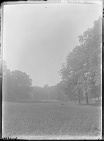 view [Unidentified Garden in Massachusetts, No. 1]: view of meadow and trees. digital asset: [Unidentified Garden in Massachusetts, No. 1]: view of meadow and trees.: [between 1920 and 1939]