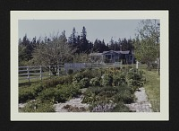 view [Ruth Moore Garden]: garden and fence. digital asset: [Ruth Moore Garden] [photoprint]: garden and fence.
