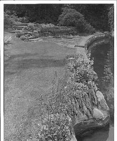 view [Laurelwood Arboretum]: view of steps, terrace and edge of lake planted with coral bells. digital asset: [Laurelwood Arboretum] [photoprint]: view of steps, terrace and edge of lake planted with coral bells.