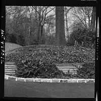view [Unidentified Garden in Short Hills, New Jersey, No. 2]: shrub border and retaining wall leading up to wooded area. digital asset: [Unidentified Garden in Short Hills, New Jersey, No. 2] [photonegative]: shrub border and retaining wall leading up to wooded area.