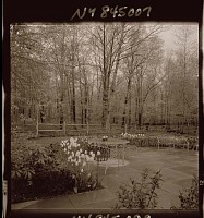 view [Unidentified Garden in Armonk, New York, No. 1]: patio and spring bulbs, looking toward woods. digital asset: [Unidentified Garden in Armonk, New York, No. 1] [photonegative]: patio and spring bulbs, looking toward woods.