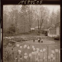 view [Unidentified Garden in Armonk, New York, No. 1]: looking across patio with neighboring house in background. digital asset: [Unidentified Garden in Armonk, New York, No. 1] [photonegative]: looking across patio with neighboring house in background.