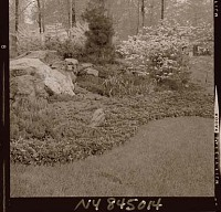 view [Unidentified Garden in Armonk, New York, No. 1]: garden detail. digital asset: [Unidentified Garden in Armonk, New York, No. 1] [photonegative]: garden detail.