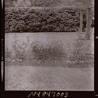 view [Unidentified Garden in Armonk, New York, No. 3]: garden border with lawn and dense hedge beyond. digital asset: [Unidentified Garden in Armonk, New York, No. 3] [photonegative]: garden border with lawn and dense hedge beyond.