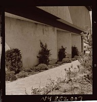 view [Unidentified Garden in Quogue, New York]: walkway and foundation planting. digital asset: [Unidentified Garden in Quogue, New York] [photonegative]: walkway and foundation planting.