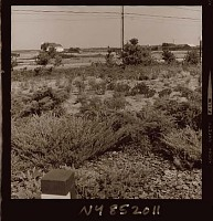 view [Unidentified Garden in Quogue, New York]: looking from driveway area toward the surrounding landscape. digital asset: [Unidentified Garden in Quogue, New York] [photonegative]: looking from driveway area toward the surrounding landscape.