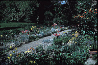 view Unidentified Garden in Cleveland, Ohio: garden path and borders in spring. digital asset: Unidentified Garden in Cleveland, Ohio: garden path and borders in spring.: 1965 May