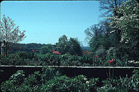 view Unidentified Garden in Cleveland, Ohio: looking across the garden and a stone wall to open space. digital asset: Unidentified Garden in Cleveland, Ohio: looking across the garden and a stone wall to open space.: 1965 May.