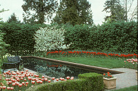 view [Booth Garden]: lap pool, lawn and tulips; hedge and evergreens in background. digital asset: [Booth Garden]: lap pool, lawn and tulips; hedge and evergreens in background.: 1992 Mar.