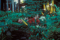 view [Bella Madrona]: shade-tolerant perennials and ferns grow under the trees. digital asset: [Bella Madrona]: shade-tolerant perennials and ferns grow under the trees.: 1994 May.