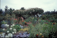 view [Birds and Bees]: garden with cleome, red cabbages, tomatoes, zinnias, and clematis arbor. digital asset: [Birds and Bees]: garden with cleome, red cabbages, tomatoes, zinnias, and clematis arbor.: 2002 Sep.