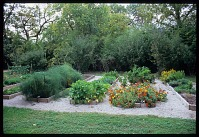 view [Mockingbird Farms]: the garden beds are shared as a single garden rather than subdivided into individual plots. digital asset: [Mockingbird Farms]: the garden beds are shared as a single garden rather than subdivided into individual plots.: 2011 Oct.
