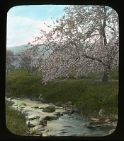 view Unidentified Garden in Middleburg, Virginia digital asset: Unidentified Garden in Middleburg, Virginia: [between 1914 and 1949?]