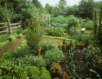 view [Untitled Garden]: overview of organic garden with potted rosemary in center of bed. digital asset: [Untitled Garden]: overview of organic garden with potted rosemary in center of bed.: 1996 May.