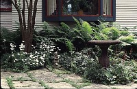 view [Tatterdemalion]: a shade garden on the north side of the house with a bird bath and featuring ferns and Anemone sylvestris. digital asset: [Tatterdemalion]: a shade garden on the north side of the house with a bird bath and featuring ferns and Anemone sylvestris.: 1998 Jul.