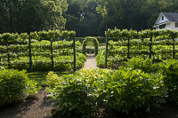 view [House in the woods]: the vegetable and fruit potager are surrounded by wire fencing and espalier fruit trees. digital asset: [House in the woods]: the vegetable and fruit potager are surrounded by wire fencing and espalier fruit trees.: 2011 Aug.