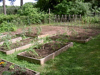 view [Homewood]: raised garden beds and supports for climbing plants in the vegetable garden. digital asset: [Homewood]: raised garden beds and supports for climbing plants in the vegetable garden.: 2005 May.